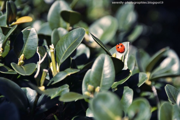1aaad-coccinelle2b252822529