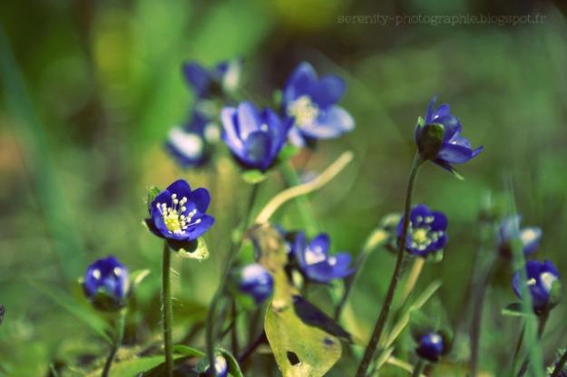 7db77-fleurs2bprintemps